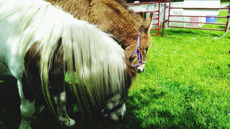 Pony Ride No People Outdoors Pony Ponys