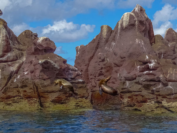 Sunbathing Sea Lions Beauty In Nature Day Island Nature No People Outdoors Relaxing Rock - Object Sea Lions Sky Sunbathing Water Water Reflections