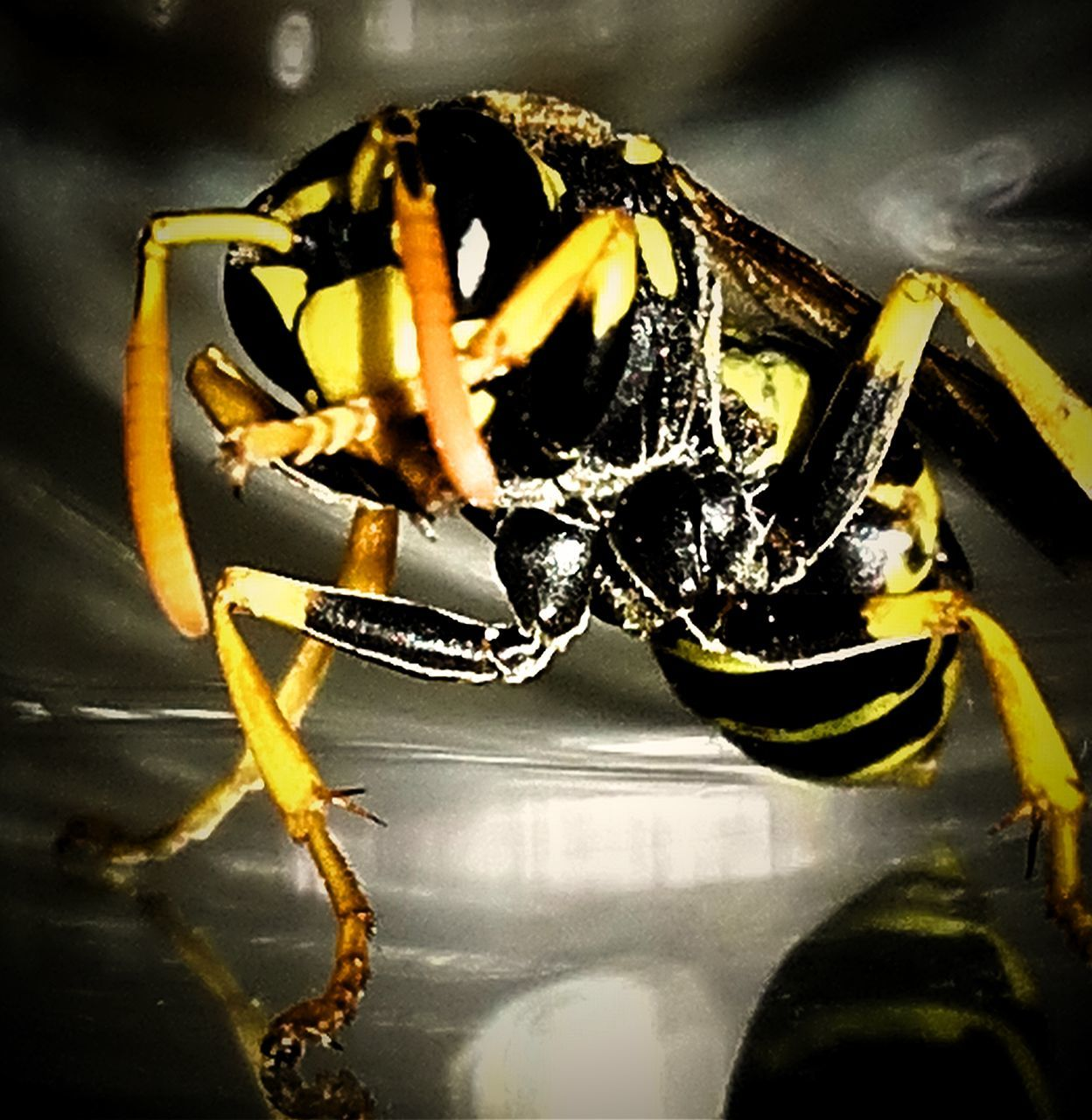 one animal, animal themes, animals in the wild, insect, animal wildlife, close-up, no people, yellow, outdoors, day, nature
