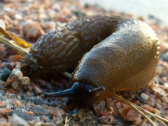 Slug City Life Homeless Lost Discover The World Check This Out Searching Saidwalk Uglybeautiful Taking Photos Passing By Traveller Hello World On The Road On The Streets Gastropoda