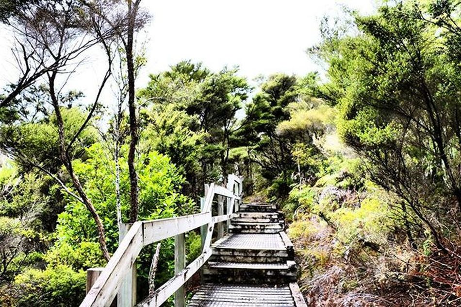 Shades of Green. Who would you walk with? Rangitoto Trees Hike NZ Nzmustdo Travel Canon Canon760D