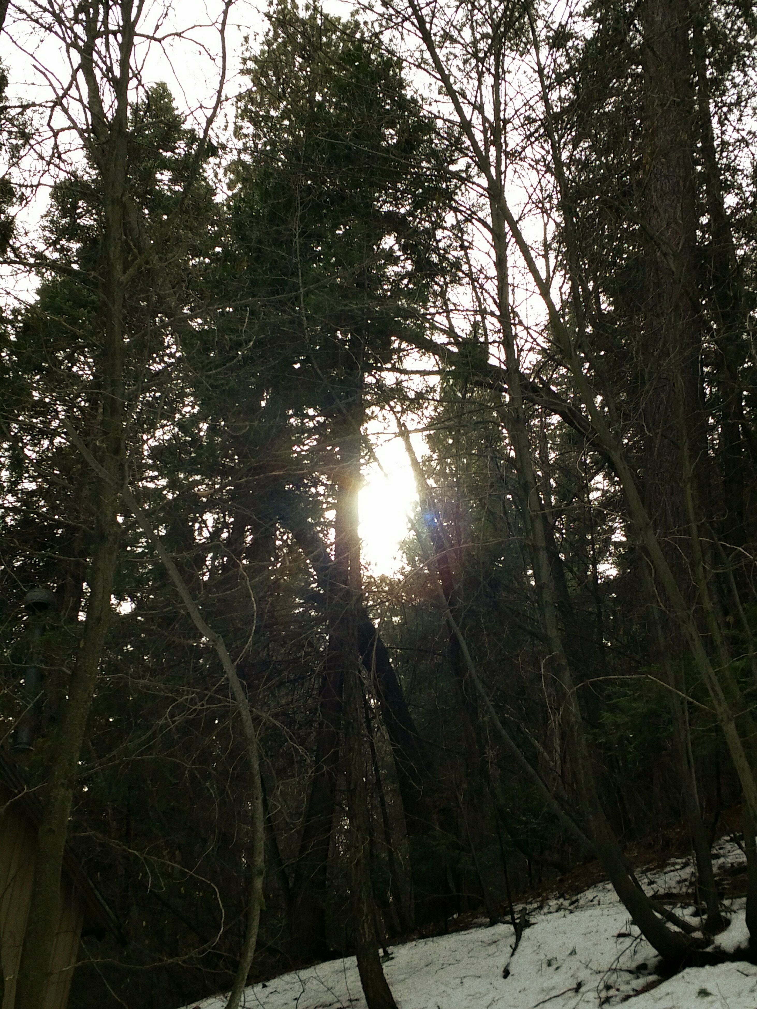 tree, sun, growth, tranquility, nature, sunlight, beauty in nature, tree trunk, branch, sunbeam, tranquil scene, lens flare, silhouette, scenics, forest, low angle view, outdoors, back lit, sky, no people