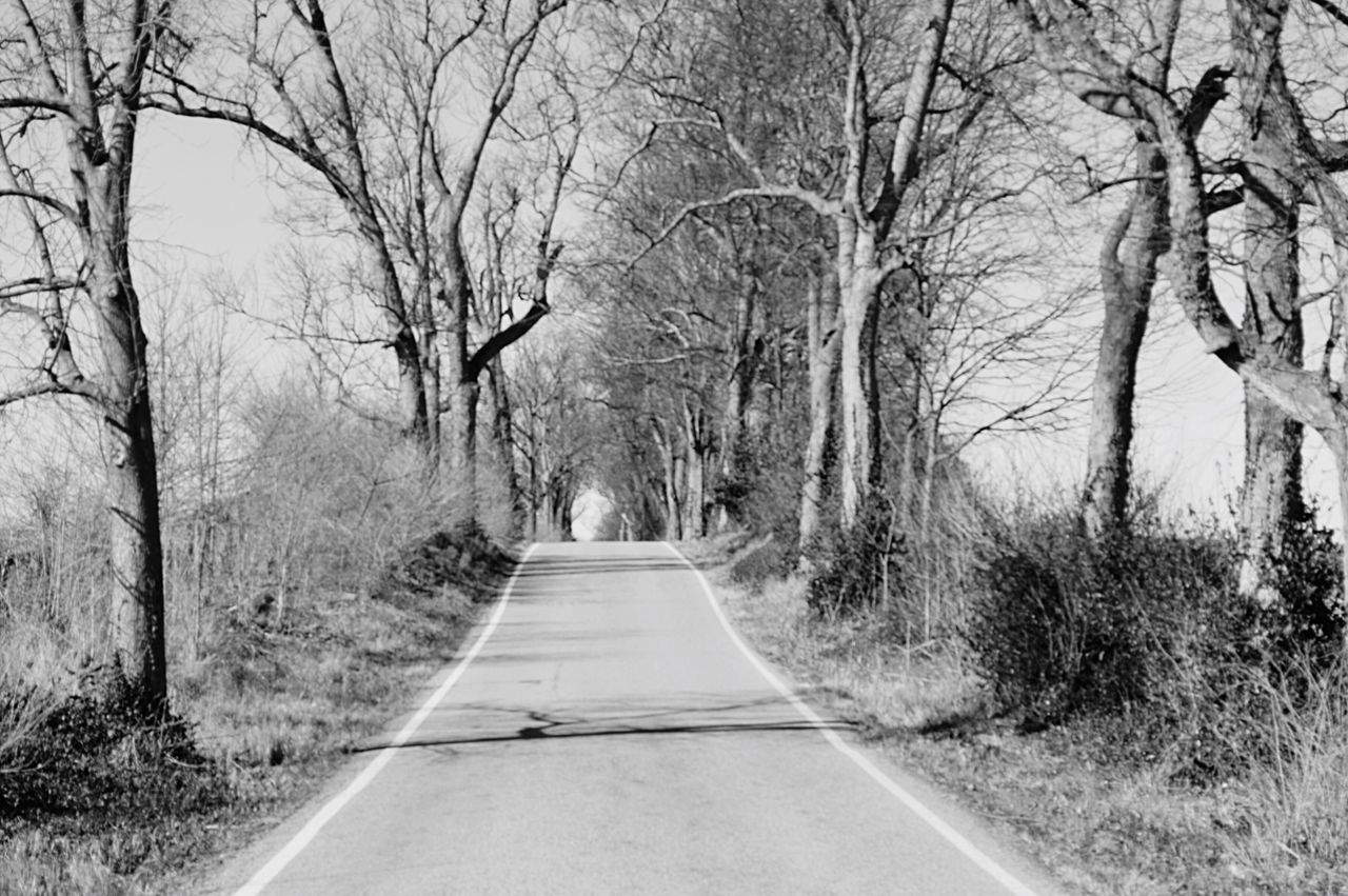 📸 Tree Bare Tree The Way Forward Road Day Branch Outdoors Nature No People Beauty In Nature