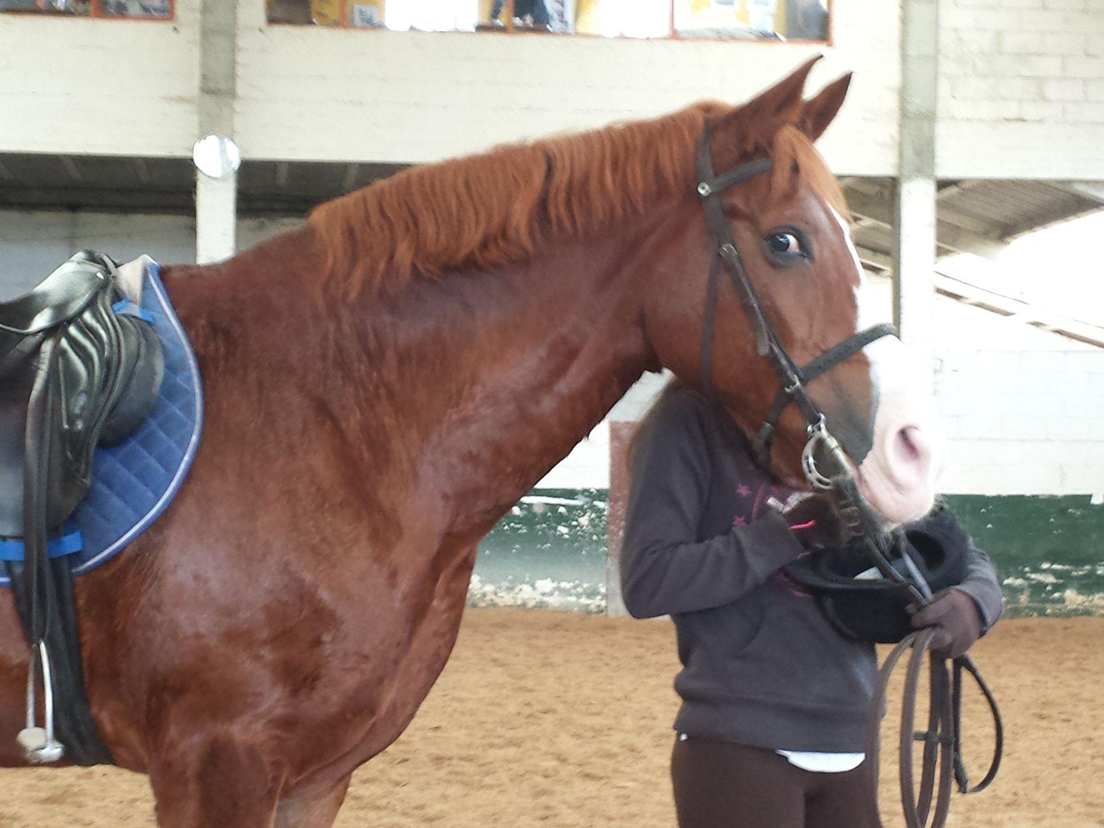 """'Cartago""""....el cotilla Horse"""
