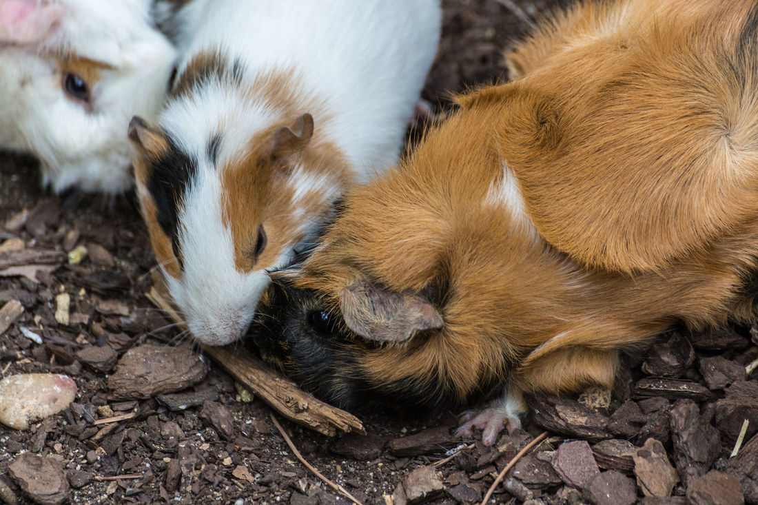 Animal Themes Close-up Day Domestic Animals Mammal No People Outdoors Pets Togetherness Young Animal