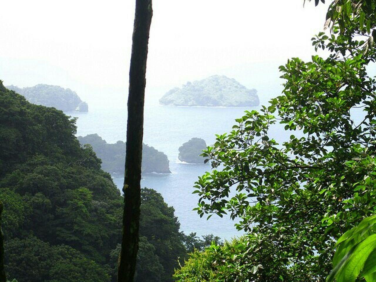Trinidad And Tobago Rainforest Jungle Island Island Life