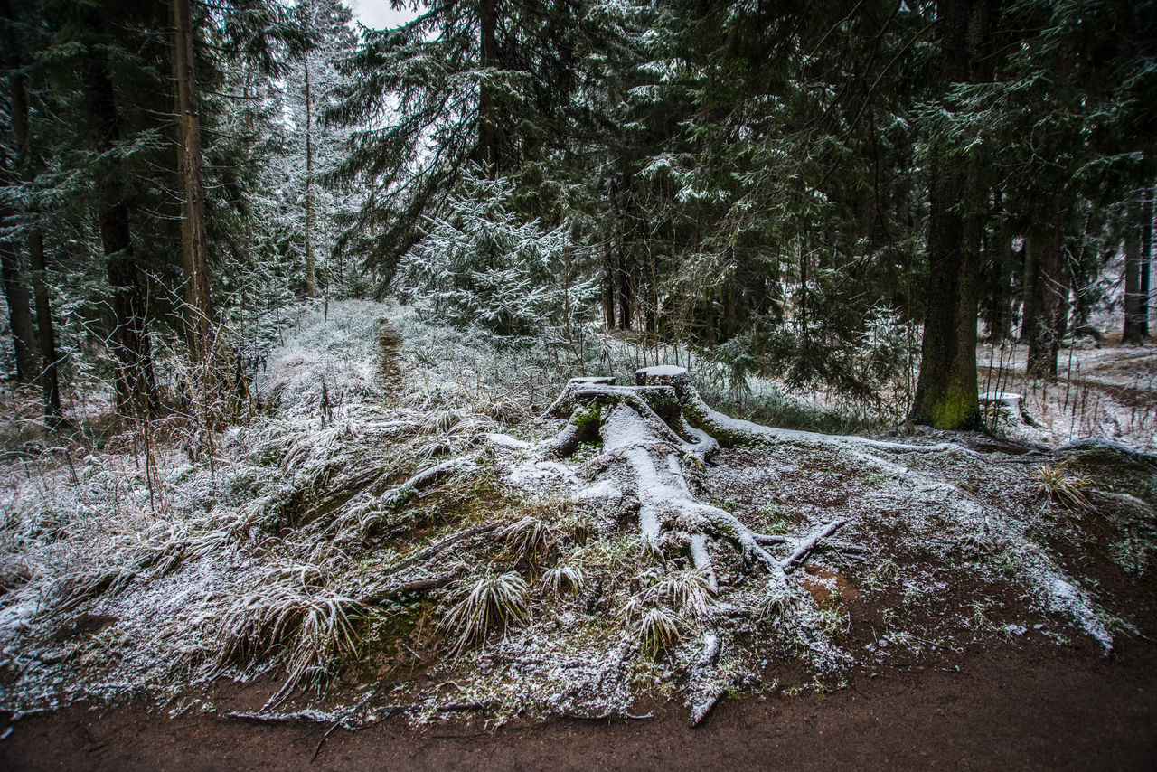 Mon Repos (Vyborg) https://en.wikipedia.org/wiki/Mon_Repos_(Vyborg) Beauty In Nature Branch Close-up Cold Temperature Day First Snow Forest Nature No People Outdoors Scenics Sky Snow Tranquility Tree Winter Woods