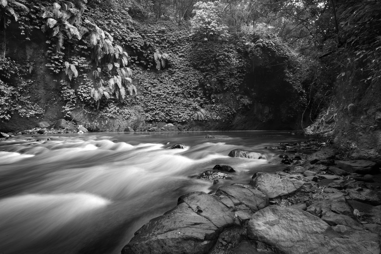 Cikapundung river flow, this beautiful river located at Ir. H. Djuanda Forest Park Conservation (Tahura) west java Tree Nature Water Beauty In Nature Outdoors INDONESIA River Monochrome Forest Rain Forest Rain Forest River