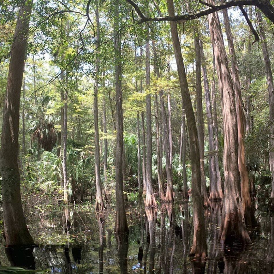 If these trees could talk... Swamplife