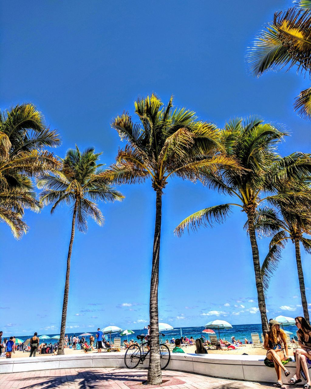 palm tree, tree, blue, scenics, nature, beauty in nature, beach, day, tranquil scene, tranquility, clear sky, tree trunk, sky, outdoors, growth, sea, vacations, low angle view, travel destinations, water, no people