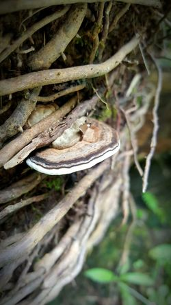 Nature Close-up Mushroom Wild Things Grow Beauty In Nature Outdoors By The Falls See The Simple Beauty