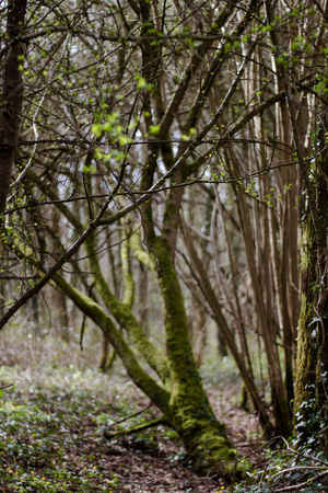 Wood Forest Photography Taking Photos Check This Out