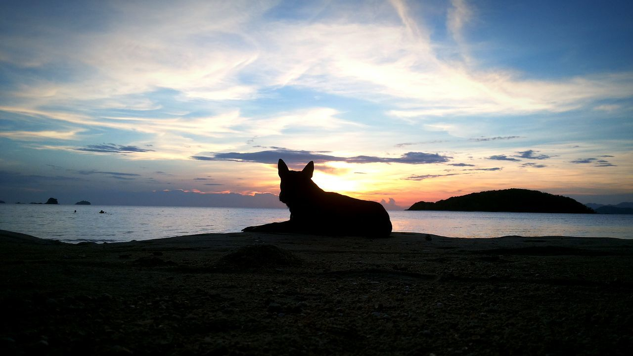 sunset, sea, water, sky, nature, horizon over water, cloud - sky, beach, beauty in nature, silhouette, domestic cat, rock - object, pets, scenics, mammal, one animal, tranquil scene, domestic animals, outdoors, animal themes, tranquility, sitting, no people, day