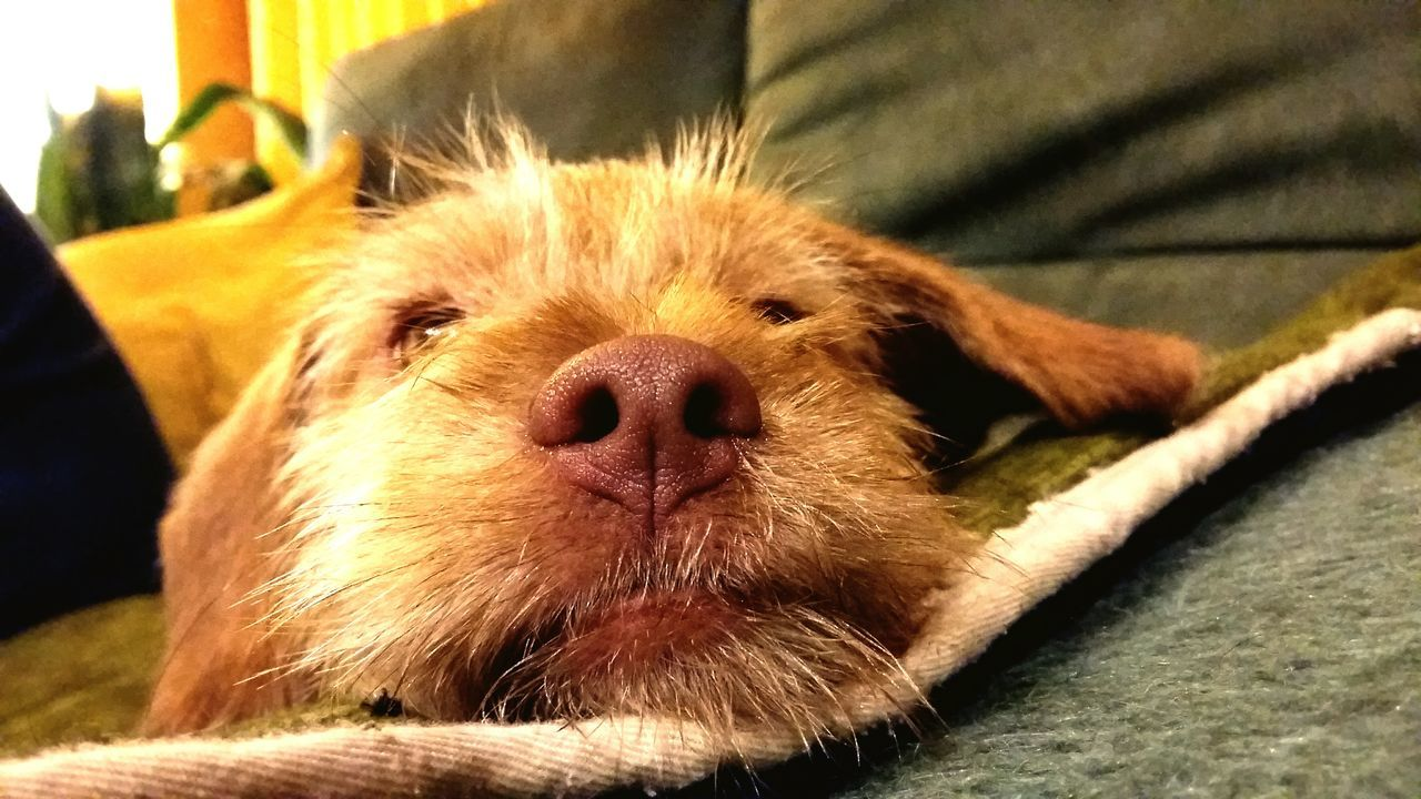 LoveDog. Dog Love Puppy Mestizo Amorperruno Nariz Linda Princesa ❤ Pelos Amor Perrosconencanto Photography Ojazos