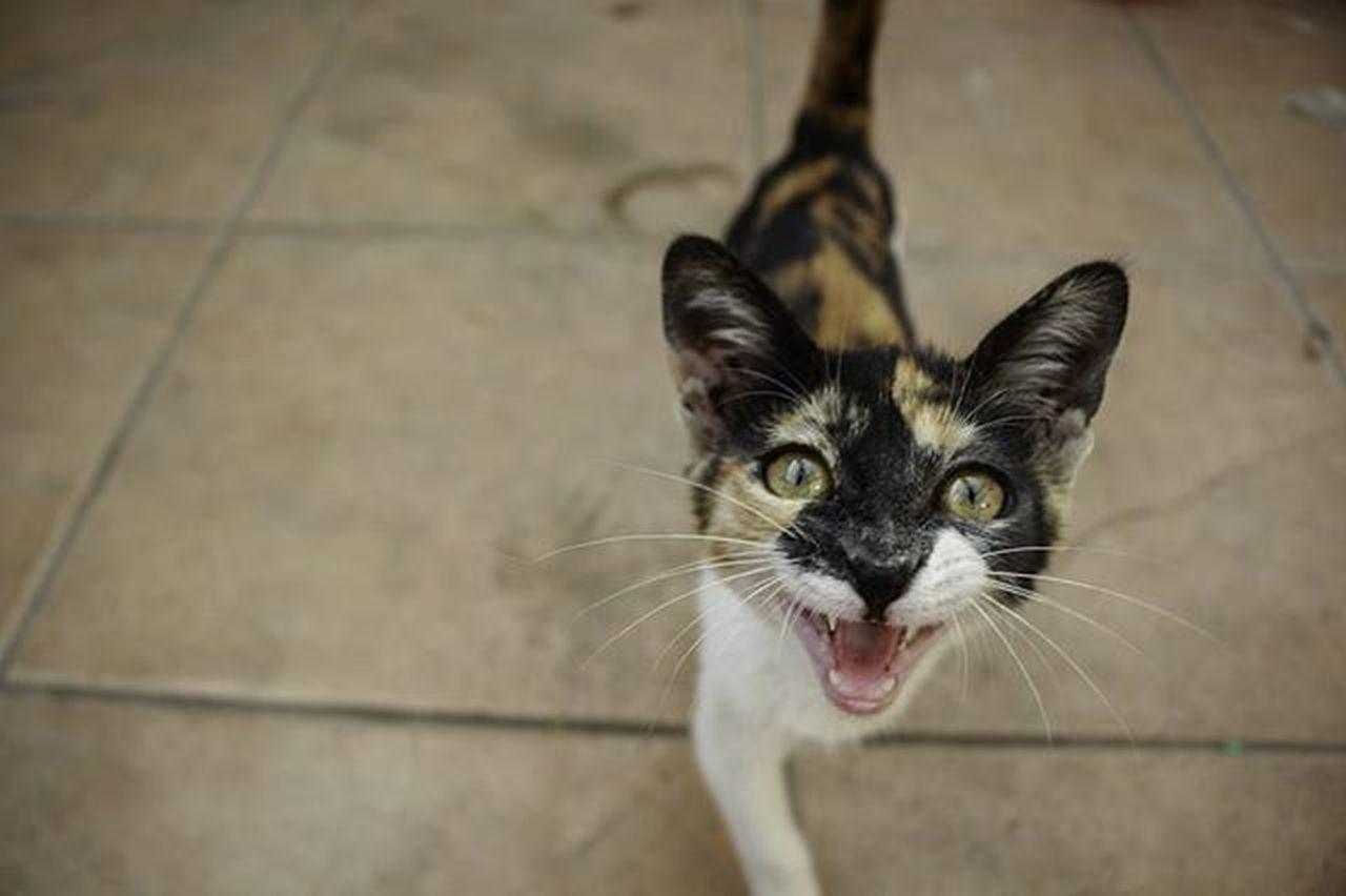 Chic-s ayudenme a encontrarle un hogar porfa, no la puedo seguir teniendo 😓 Homeless Cat Antofagasta