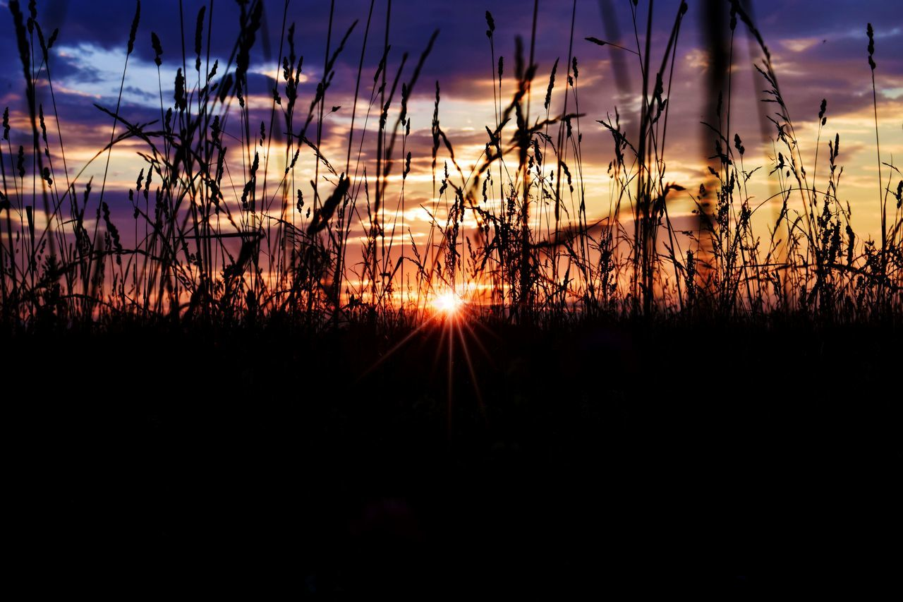 Eyeem Photo Sunset Summer Sun Taking Photos Nature Eye4photography  Sunset Silhouettes Sunsets Sunsetporn Plant Plants Field Russia Colorful Amazing Eyeemphoto
