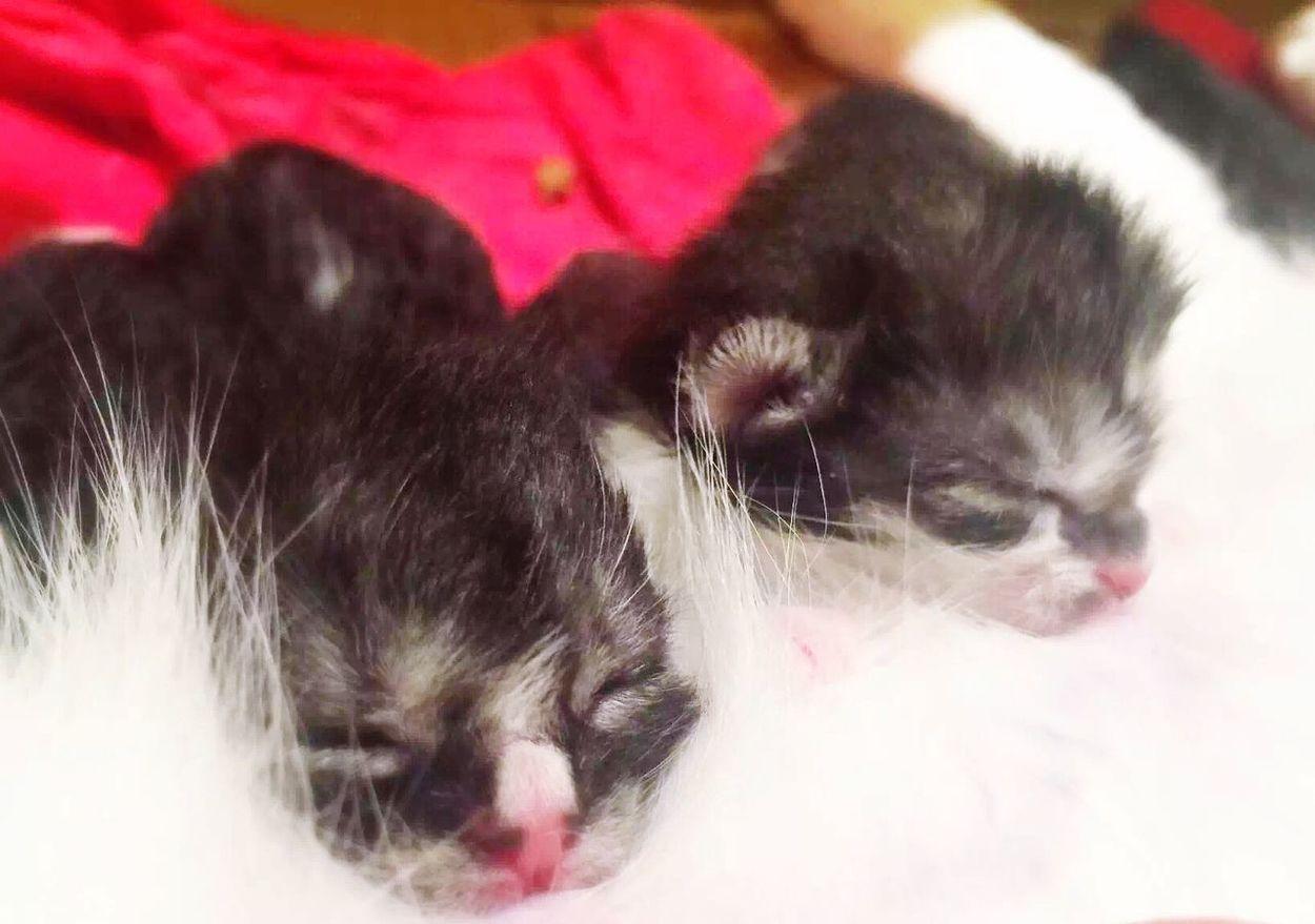 Cat Cat Lovers My Cat Cute Cats Cats 🐱 Cat♡ Cat Eyes Newborn kitten