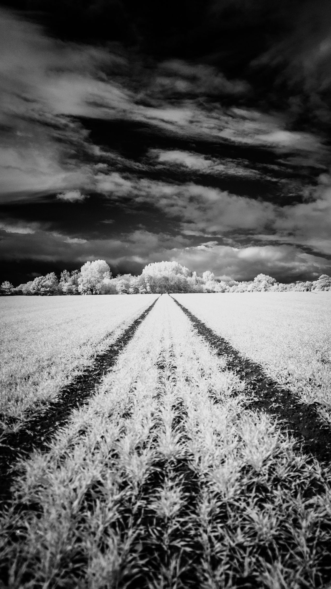 Field Landscape Nature Sky Tranquility Diminishing Perspective Agriculture Tranquil Scene Beauty In Nature Outdoors The Way Forward Weather No People Cloud - Sky Day Rural Scene Growth Scenics Grass Tree Infrared