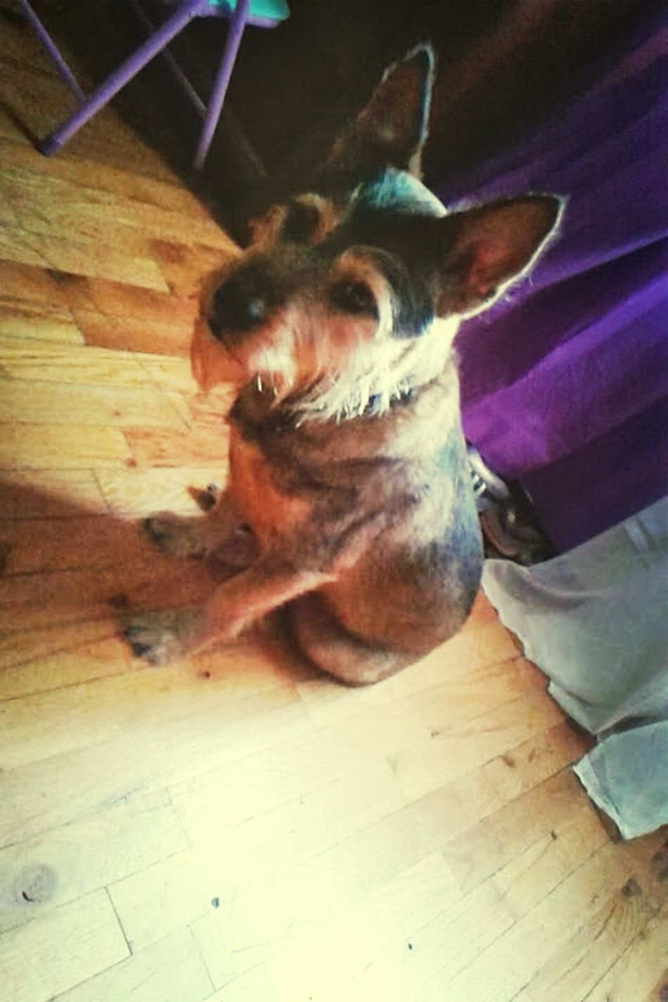 Got ♥ 4 this dog, soooo glad hes minee Lucky Terriermix Boost Filter Dogs