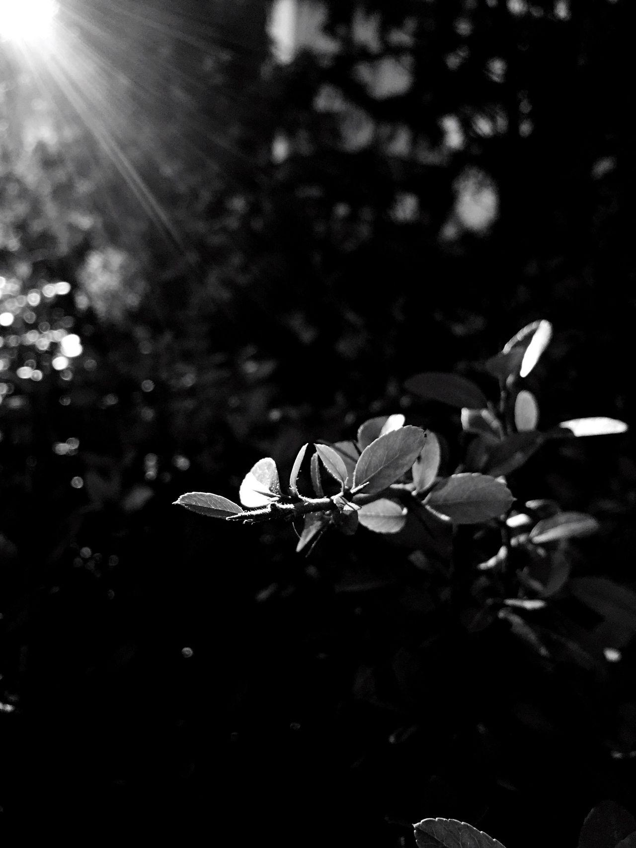 Sophisticated Black And White Black & White Blackandwhite Photography Nature Nature Photography Sun Sunlight EyeEmNewHere Break The Mold EyeEmNewHere The Great Outdoors - 2017 EyeEm Awards