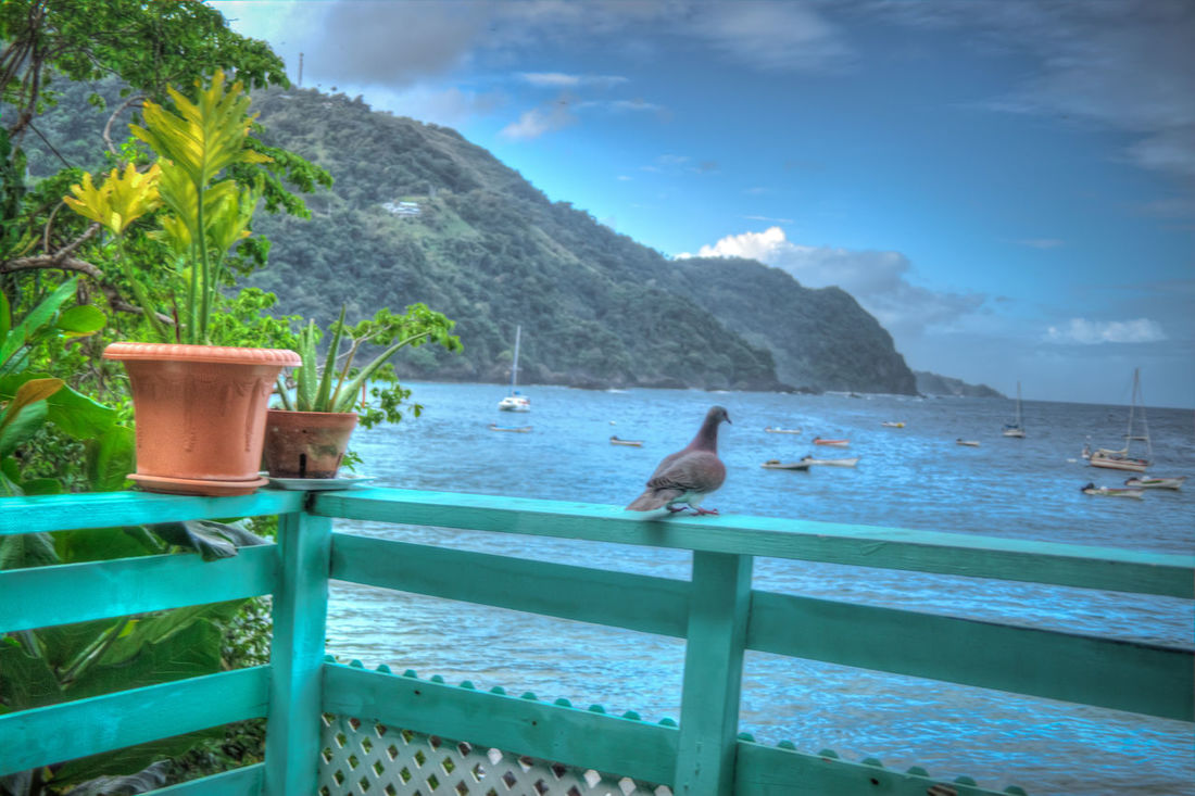 Birds🐦⛅ Water Palm Tree No People Tree Sea Sky Swimming Pool Outdoors Nature Tranquility Vacations Cloud - Sky Swimming Beauty In Nature Day Seascape Scenics Tobagoisland Bluemangocastara
