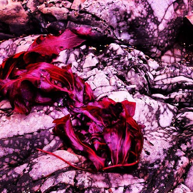 #redthursday #csummerpic #coloredit #coloraesthetics #happycolortrip #coloronroids #popyacolor #icoloramas #dhexpose#abstracters #abstracters_anonymous #abstracter #abstractart #stayabstract #appstract #photooftheday #pixoftheday #editjunky #unitedbyedi Coloraesthetics Coloredit Appstract Popyacolor Photooftheday Coloronroids StayABSTRACT Abstracters Abstractart Abstracter Unitedbyedit Dhexpose Editfever Csummerpic Editoftheday Editjunky Pixoftheday Redthursday Abstracters_anonymous Editedtodeath Happycolortrip Icoloramas