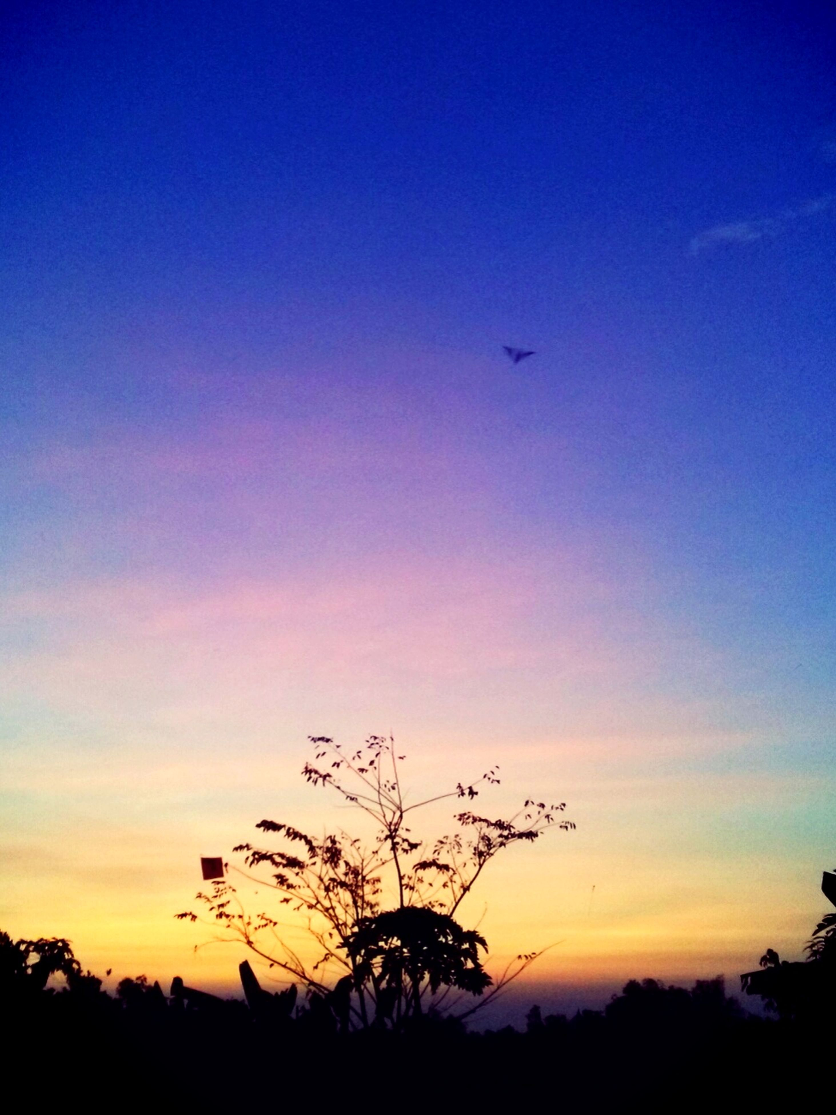 silhouette, sunset, sky, beauty in nature, tranquility, scenics, tranquil scene, low angle view, blue, tree, nature, orange color, dusk, copy space, flying, idyllic, landscape, outdoors, no people, outline