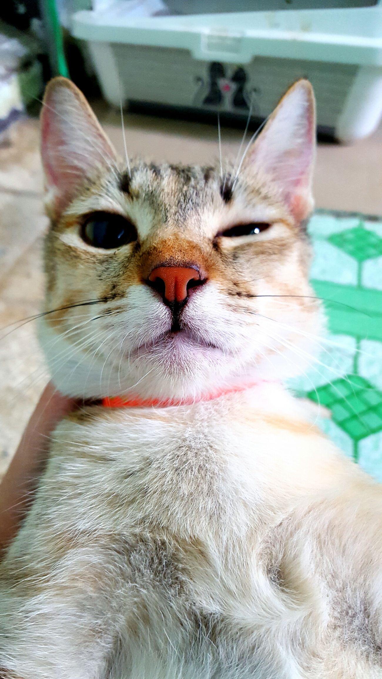 Letmetakeaselfie Animal Themes Cat Mycat❤ Cuteeee♥♡♥ Taking Photos