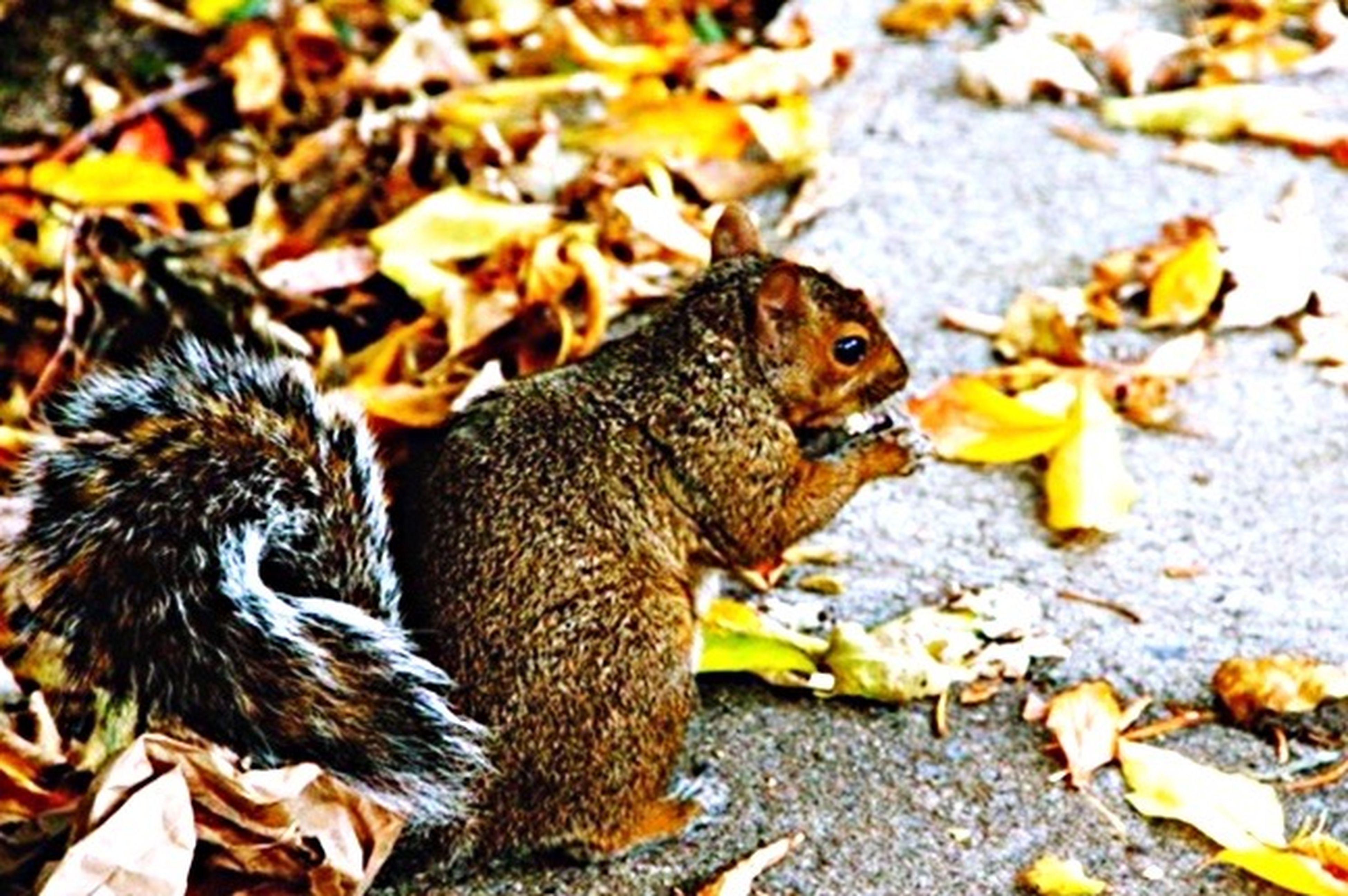 Animal Themes Leaf Nature Mammal