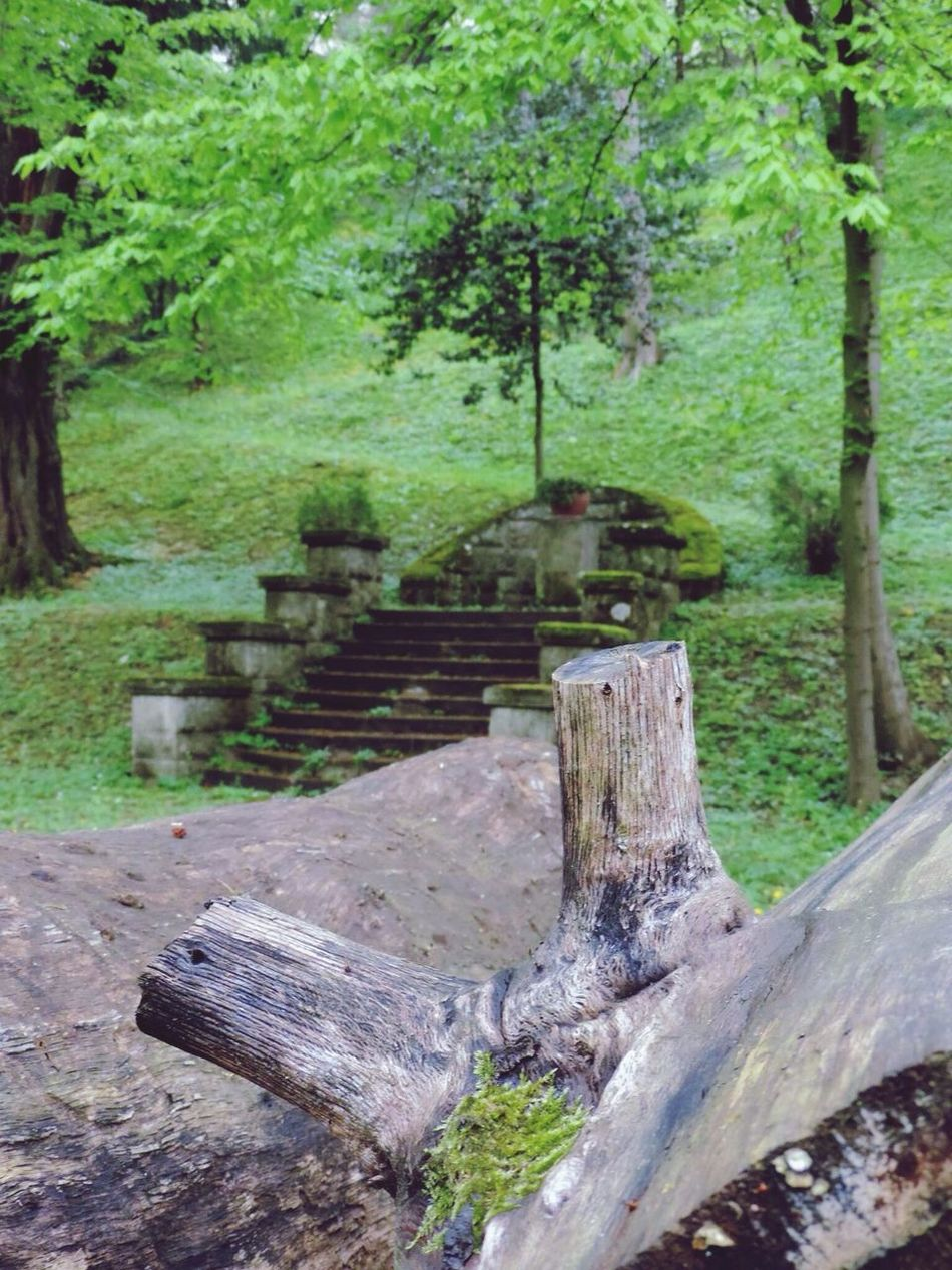 EyeEm Best Shots - Landscape Trees EyeEm Nature Lover Walks Woods Path Steps Eyeem Stairs Collection Stairs Woods