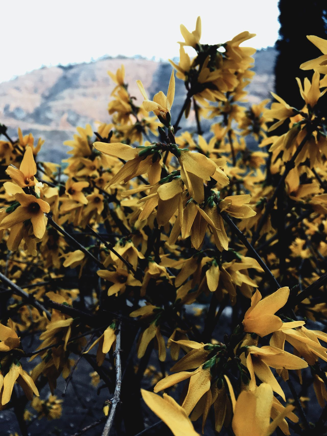 Nature Yellow Leaf Beauty In Nature Plant Autumn Growth Outdoors Close-up Day No People Fragility Mountain