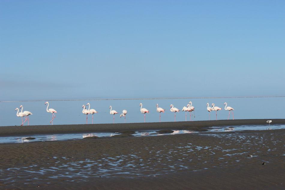 Animals In The Wild Birds On The Beach Flamingo Flamingos Flamingos In Water Walvis Bay Water Birds Wild Animals Wild Animals Close Up