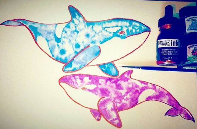 Happy killer whale sketches 😊🐋 Killerwhale Whale Art Whales Sketchbook Sketch_daily Artspipl Arts_help Arts_gallery Creative Oceanlife Sealife Animals Nature Love Tattooart Fashion Fishing Blue Purple Tiedie Followforfollow Epic Liquitex Ink