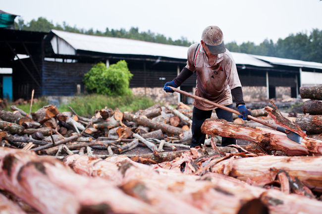 Charcoal Factory Worker Charcoal Charcoal Drawing Factory Workers Fire Outdoors Scraping Wood Selective Focus Wood - Material