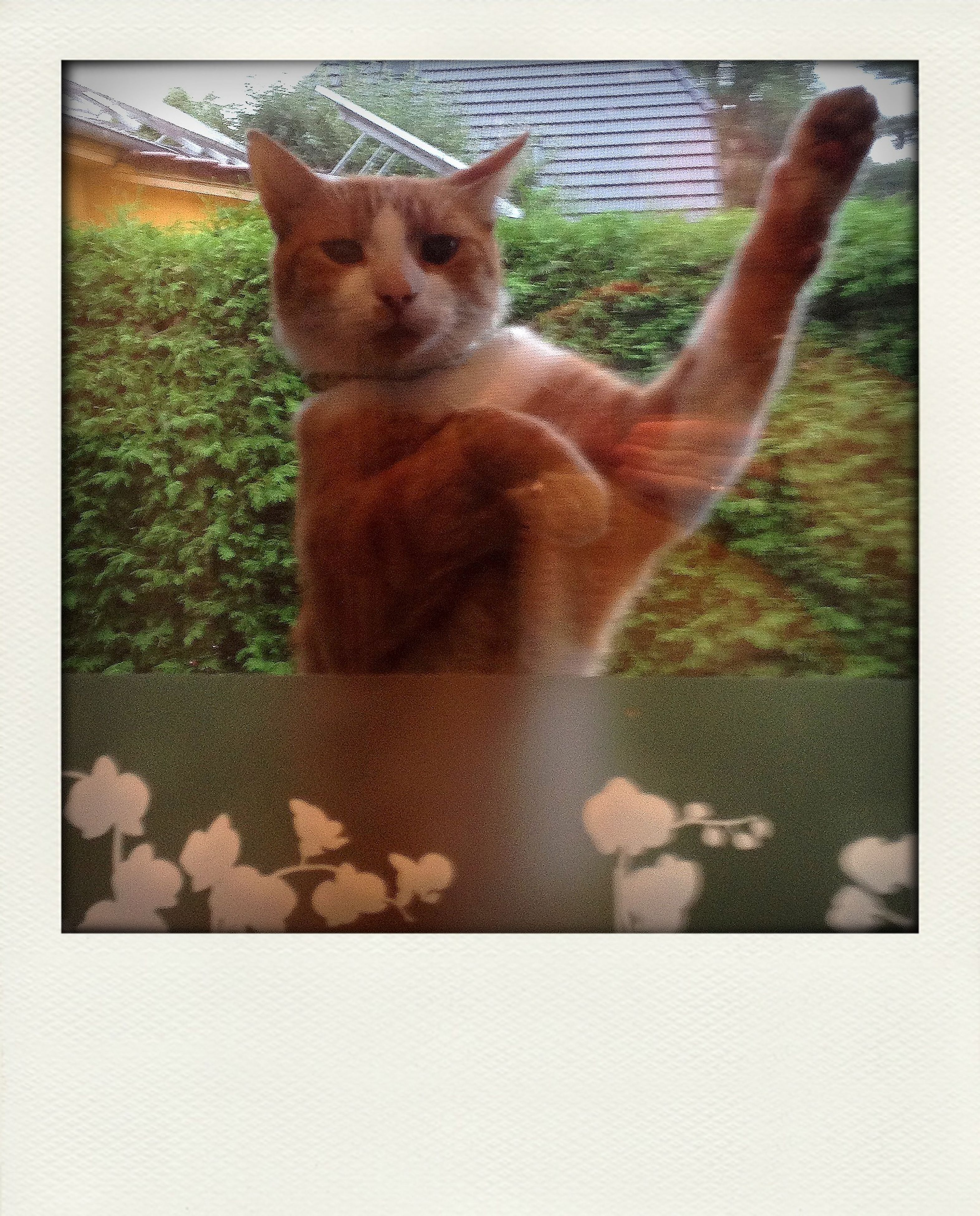 transfer print, animal themes, auto post production filter, one animal, mammal, domestic animals, pets, wildlife, sitting, domestic cat, relaxation, day, animals in the wild, frame, outdoors, high angle view, no people, full length, feline, cat