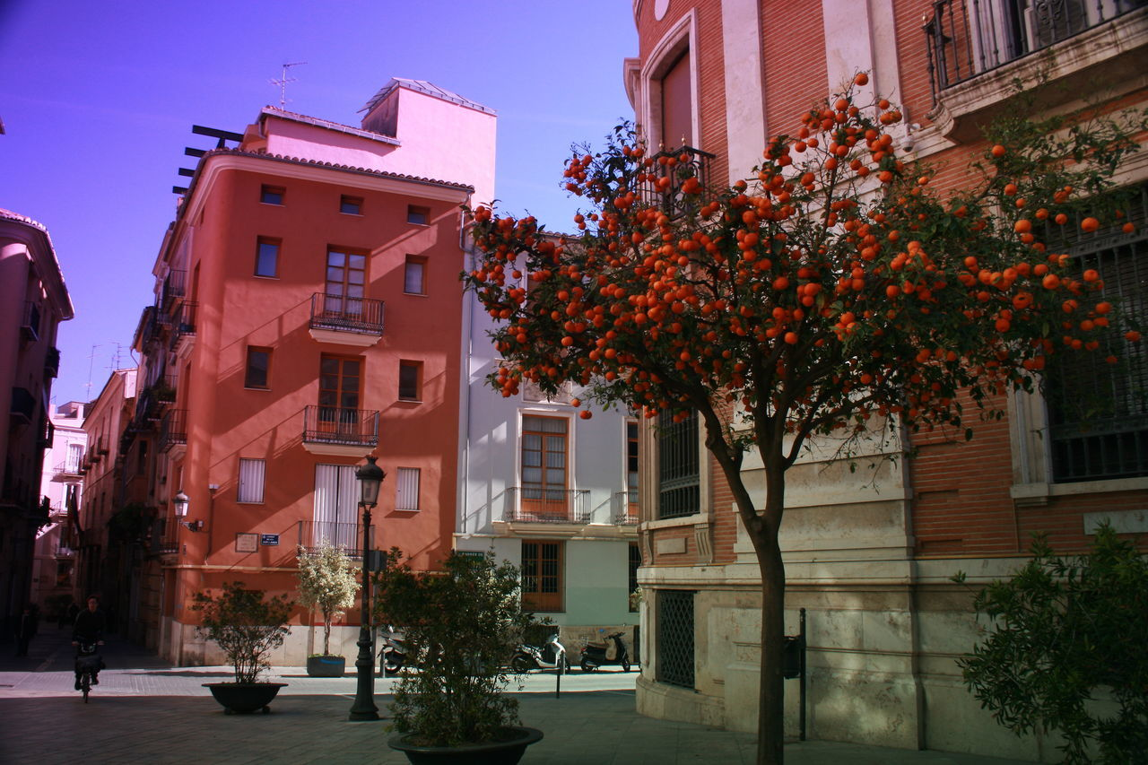 Architecture Architecture Blue Sky Building Exterior Built Structure Cityscape Colorful Buildings Orange Tree Oranges On Tree Steet Photography Urban Photography