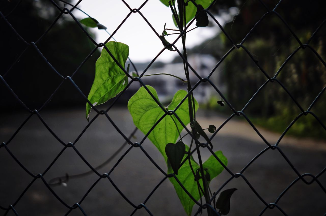 chainlink fence, protection, safety, security, no people, metal, green color, full frame, day, close-up, focus on foreground, outdoors, water, nature, sky