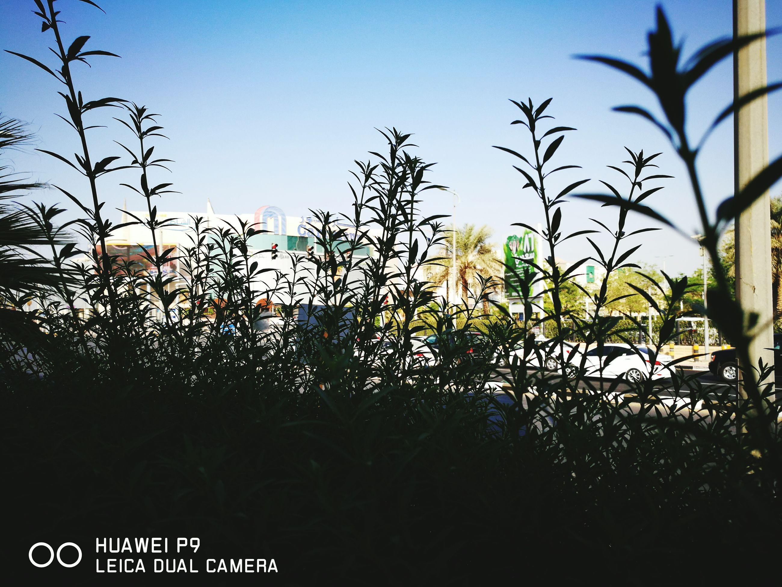 plant, growth, tranquil scene, scenics, tranquility, nature, outdoors, beauty in nature, sky, non-urban scene, blue, day, back lit, tall - high, no people, solitude