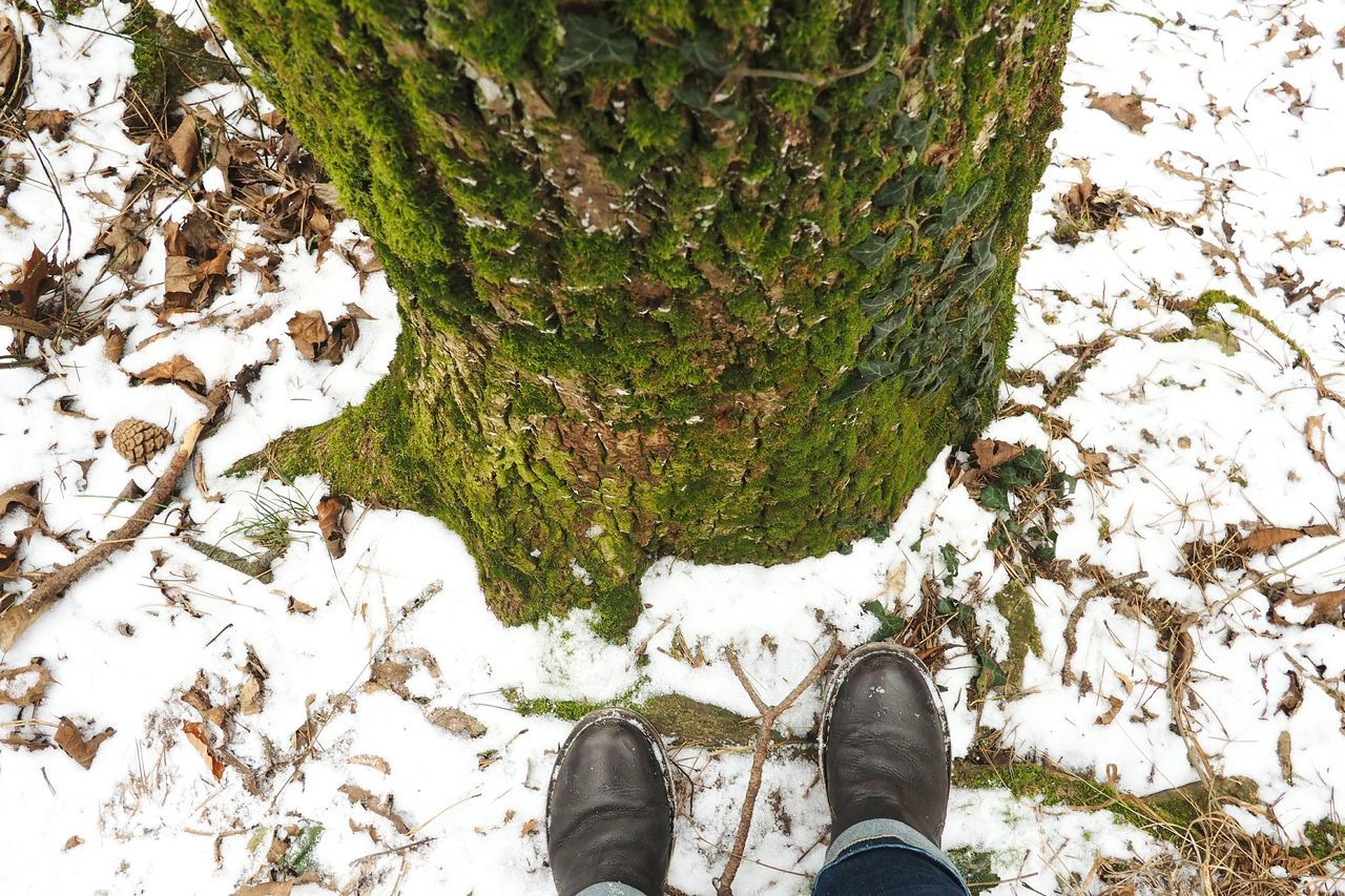 low section, shoe, human leg, day, high angle view, standing, nature, tree, tree trunk, personal perspective, outdoors, one person, real people, human body part, moss, growth, close-up, people