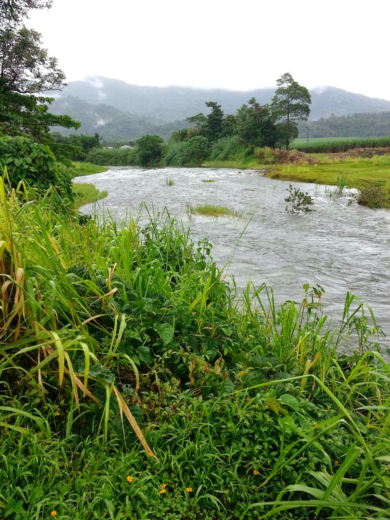 Beautiful stock photos of jungle, Beauty In Nature, Day, Field, Flowing Water