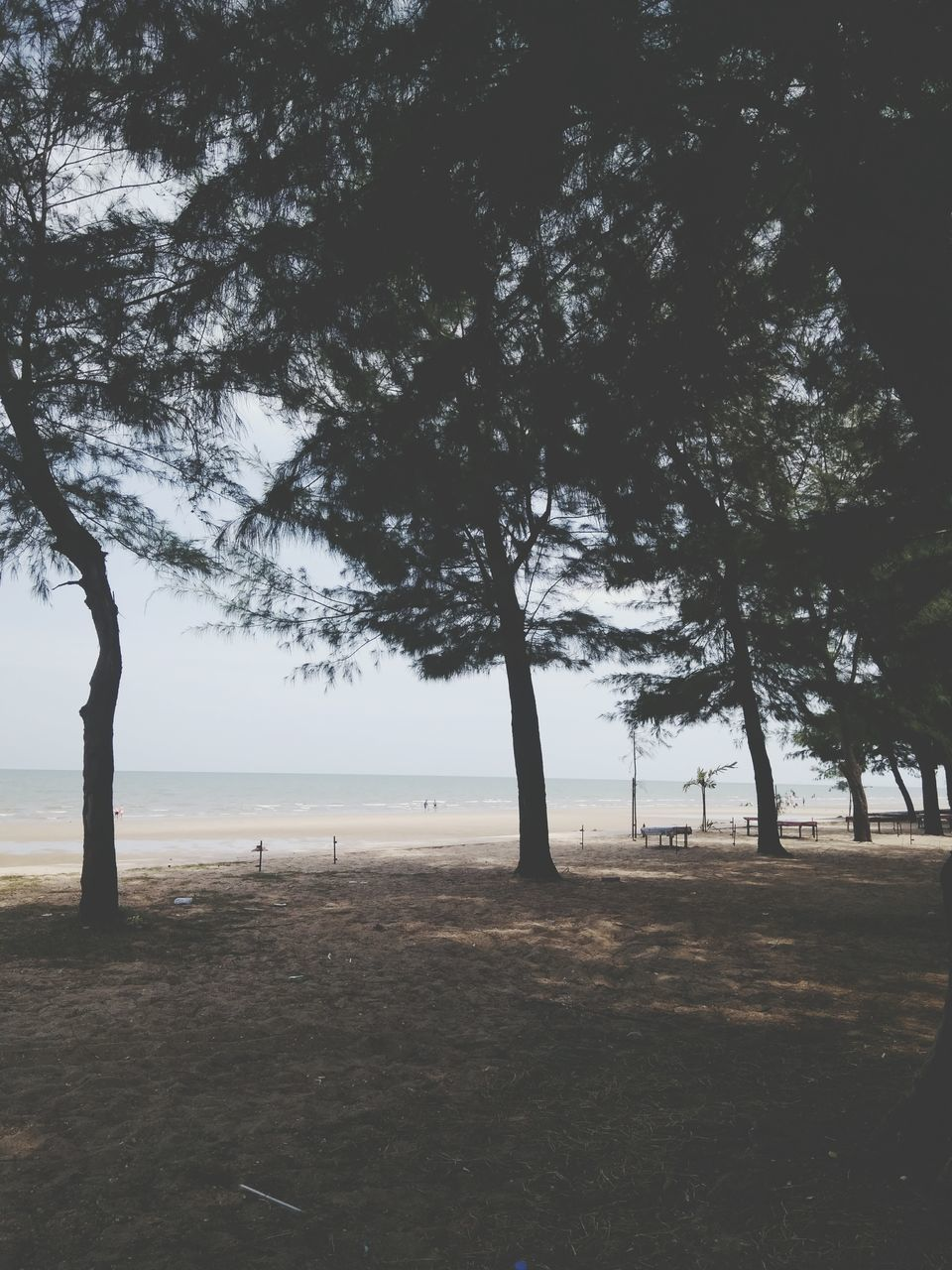 tree, nature, tranquility, tranquil scene, scenics, landscape, beauty in nature, outdoors, sea, tree trunk, day, growth, water, beach, no people, branch, grass, sky