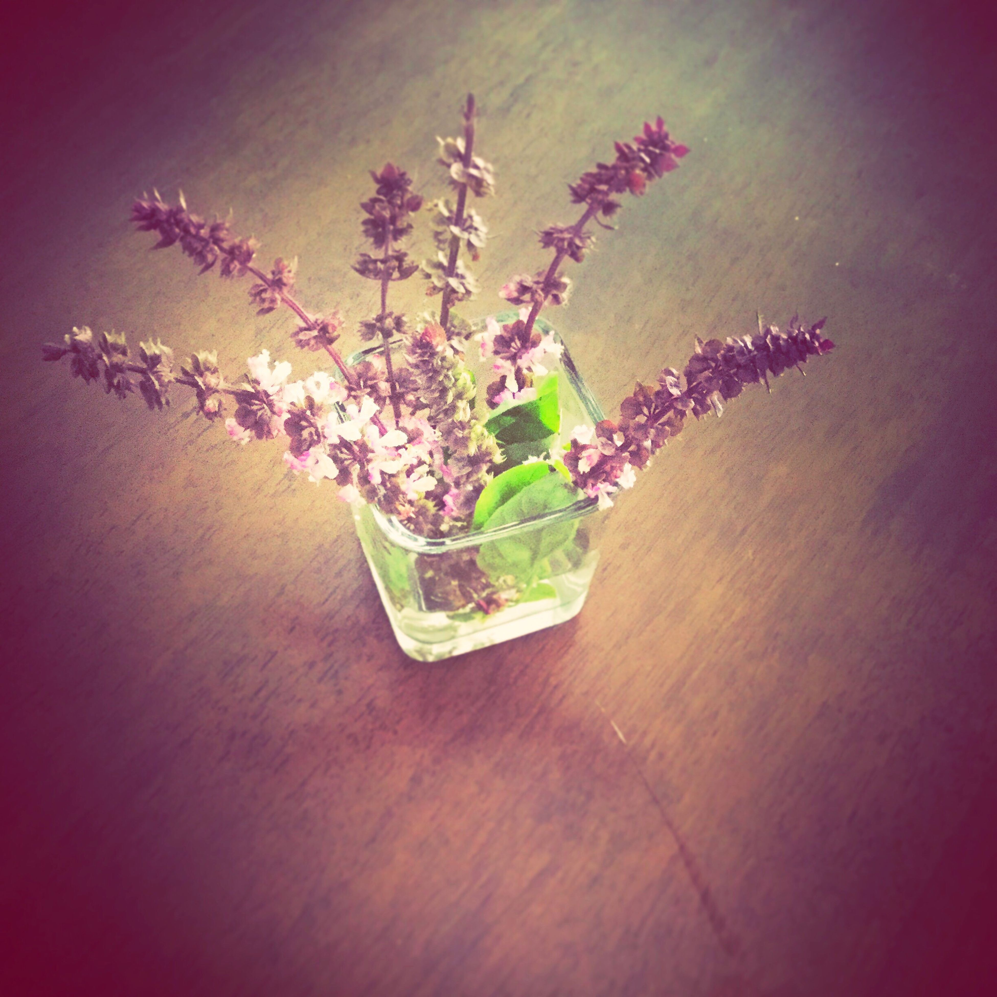 table, plant, flower, freshness, green color, multi colored, nature, no people