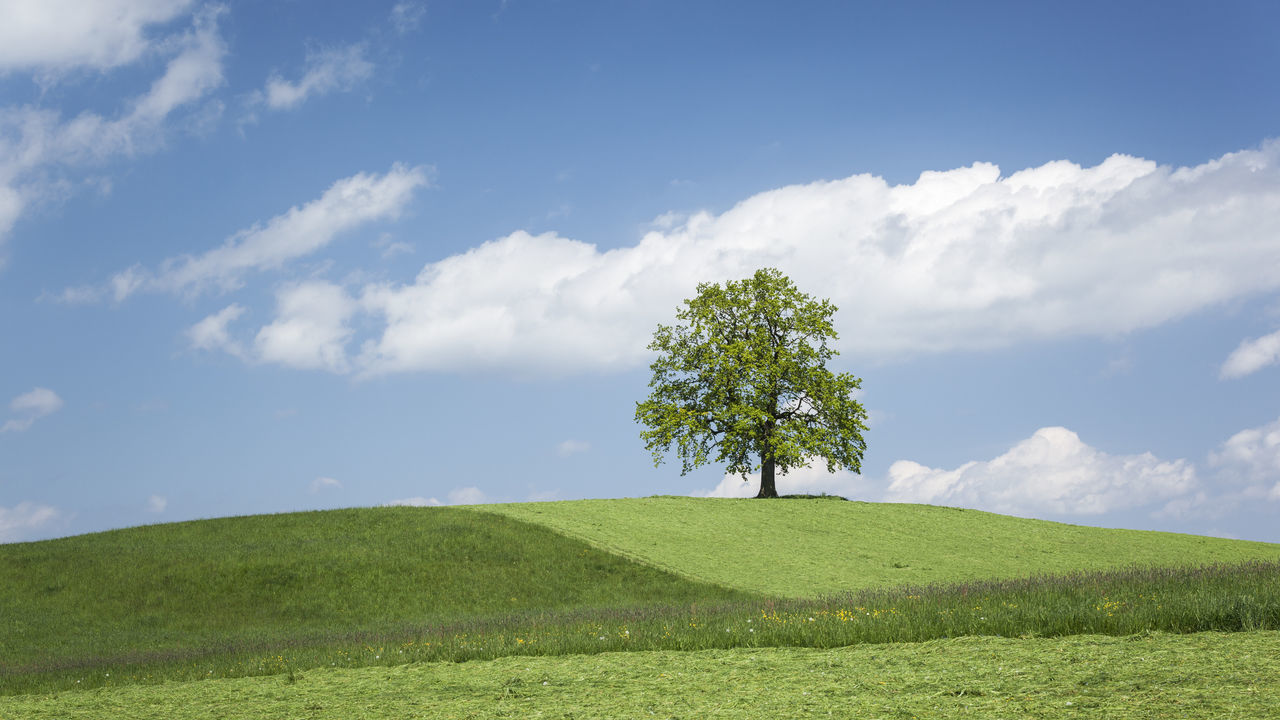 lonely tree on a hill Agriculture Beauty In Nature Cloud - Sky Clouds & Sky Day Field Grass Green Color Growth Idyllic Landscape Meadowlands Nature Nature No People Outdoors Rural Scene Scenics Single Tree Sky Tranquility Tree