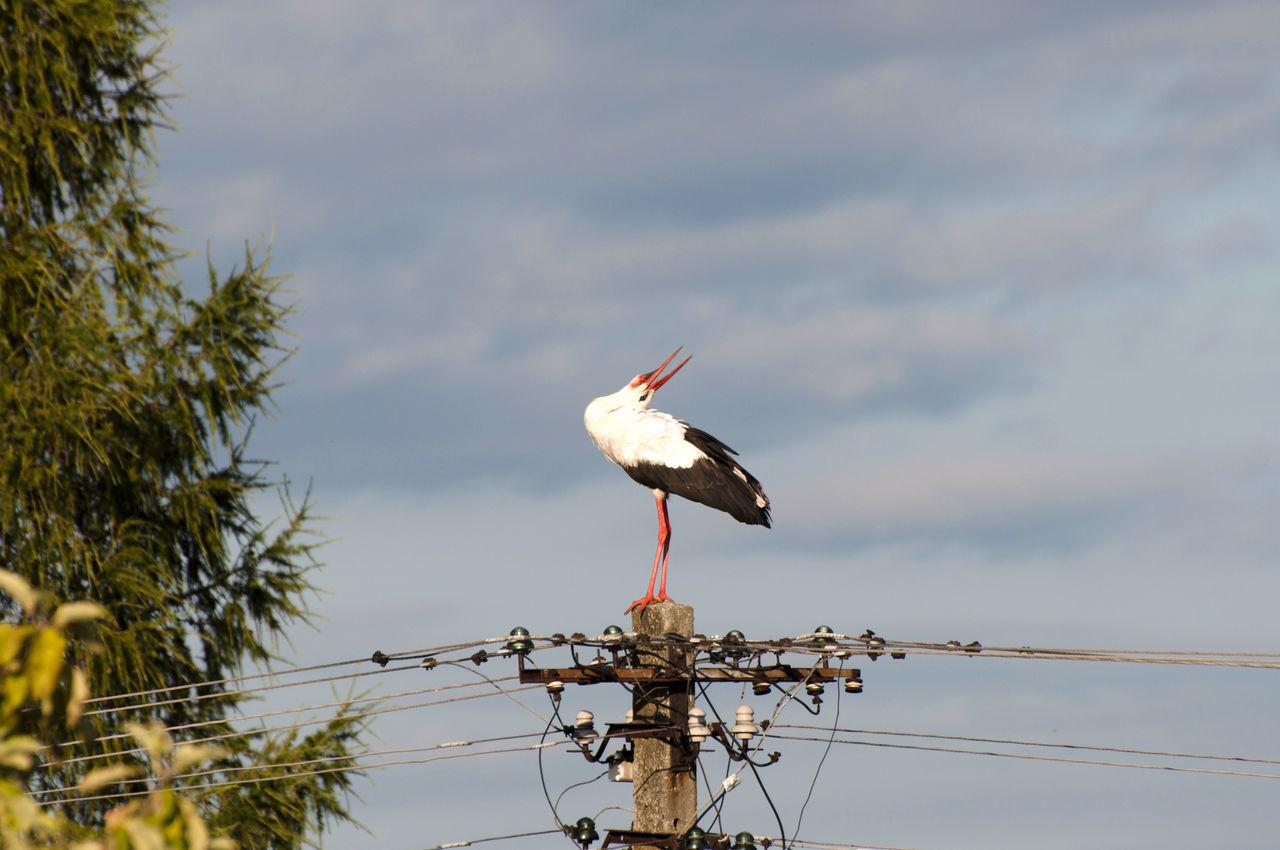 Stork Animal Wildlife Animals In The Wild Bird Pole Stork White Stork
