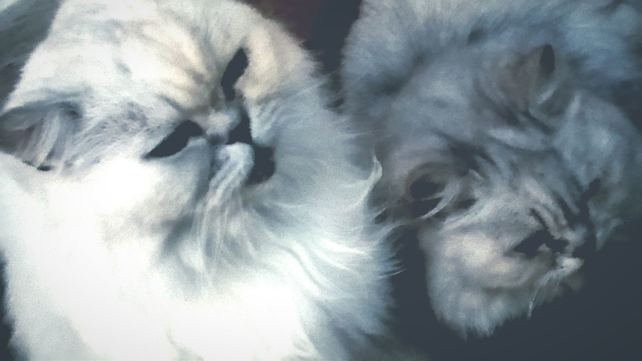 Misty And Freddie My Cats stuart little