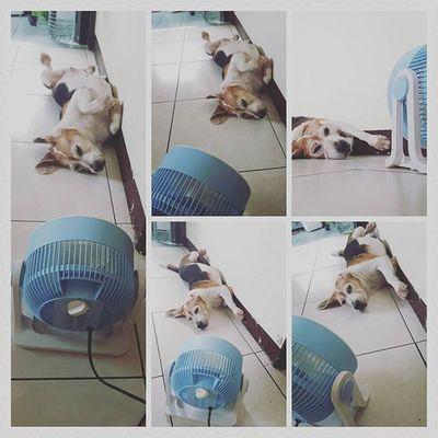 熱 啊 Mymilinbaby Beagle