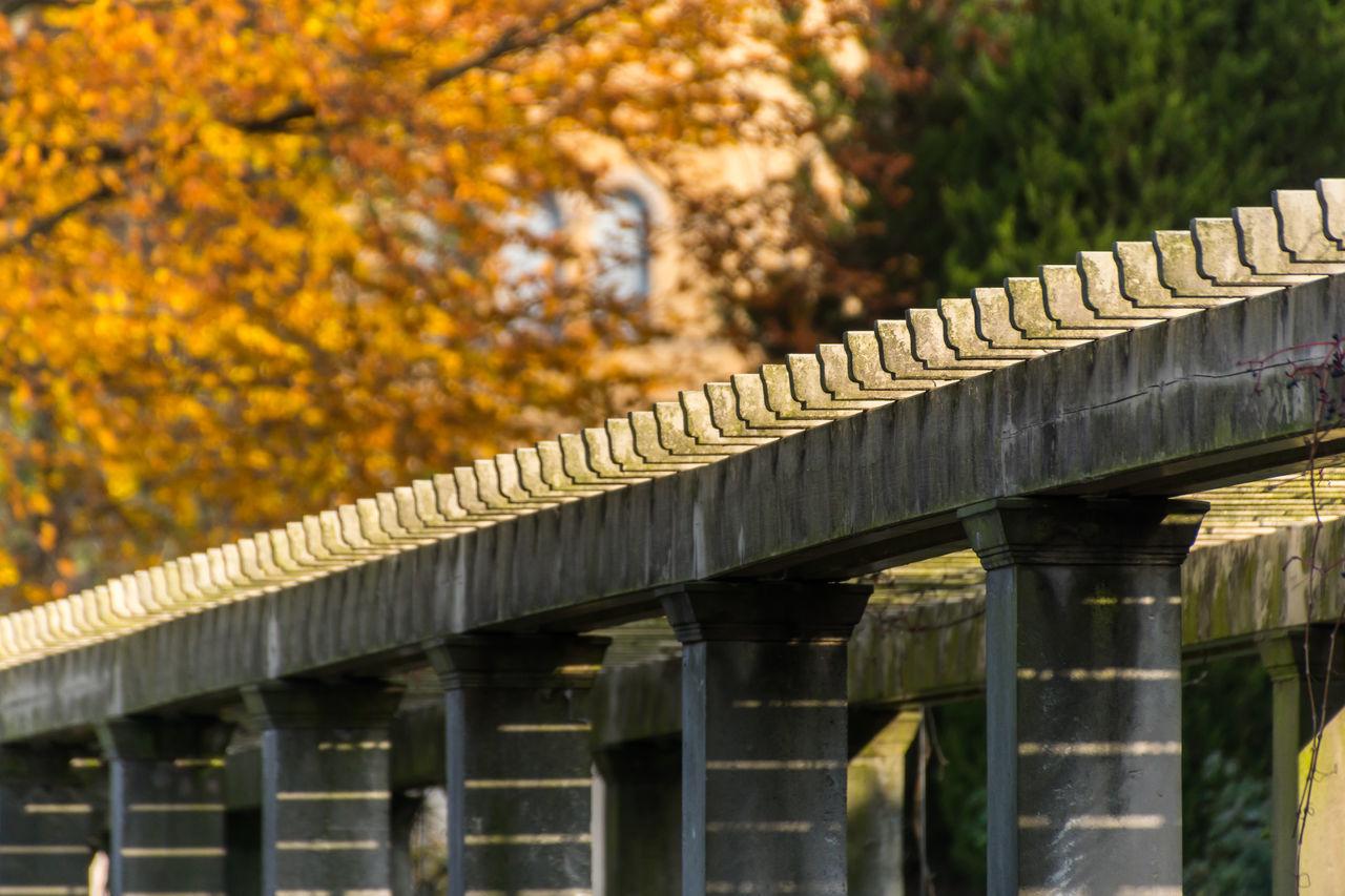 Autumn Close-up Day Diagonal Fence Nature No People Outdoors Sunlight Tree Zaun