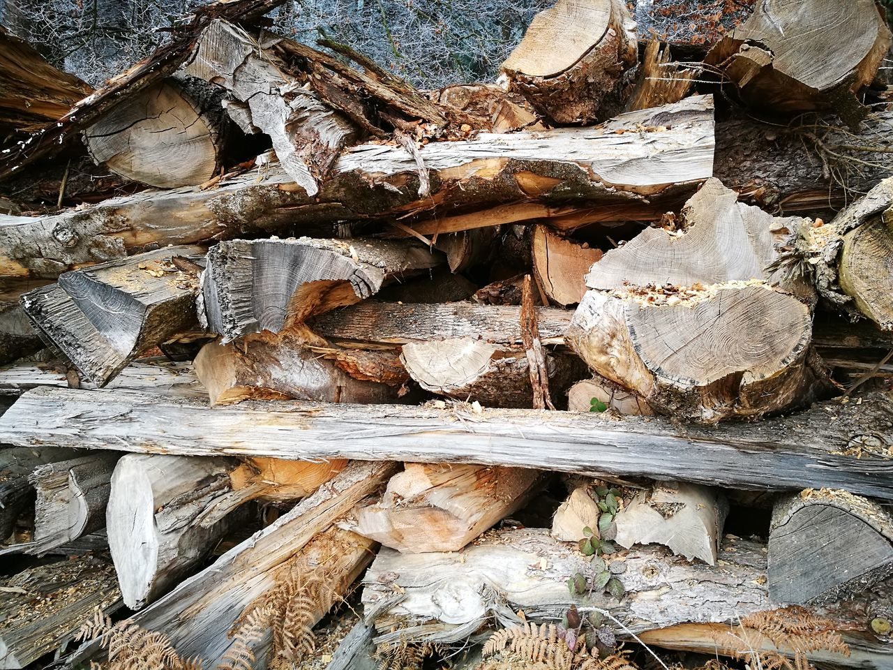 timber, log, stack, wood - material, lumber industry, full frame, deforestation, no people, heap, woodpile, day, forestry industry, backgrounds, outdoors, large group of objects, close-up, nature