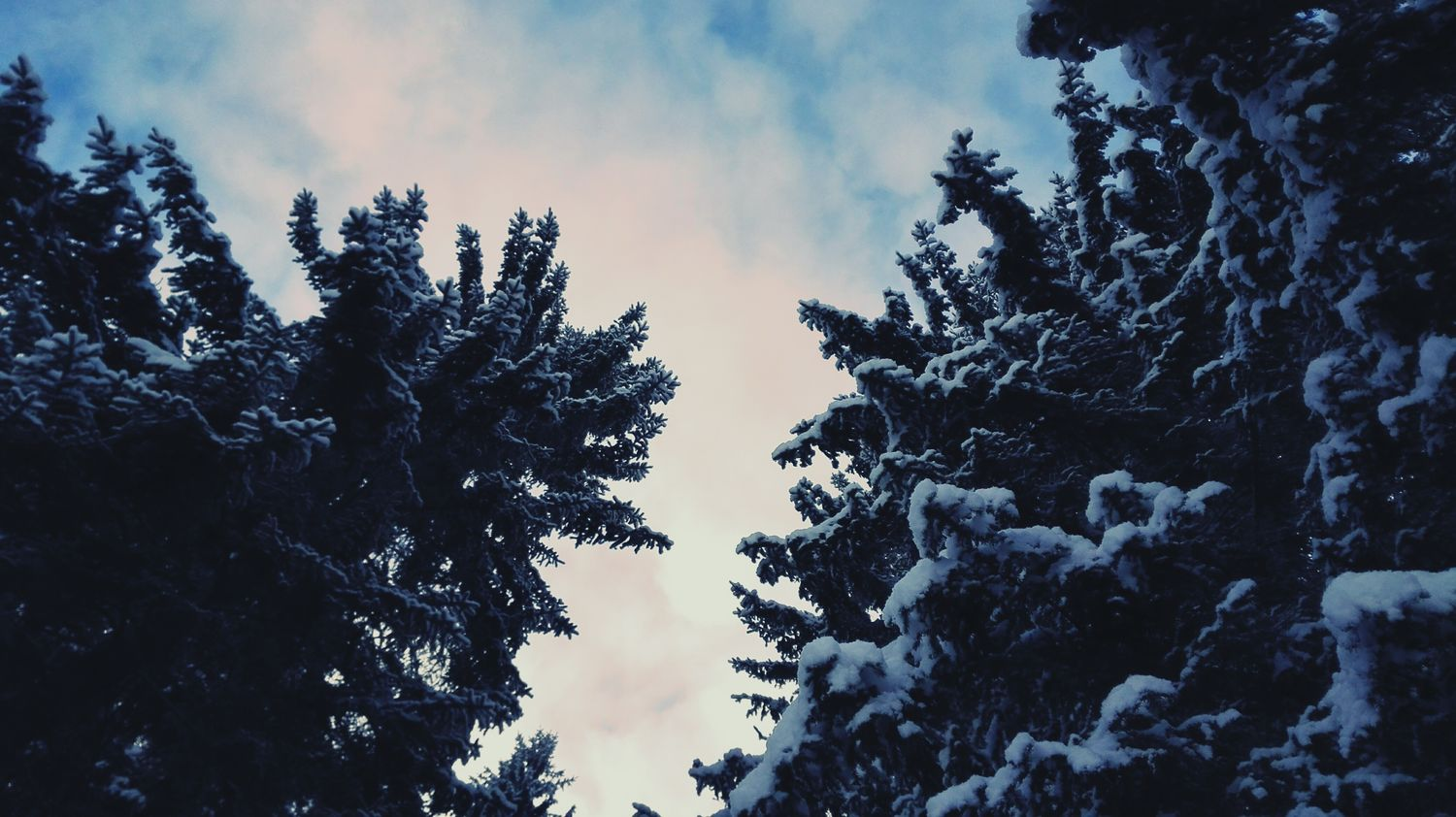 A break in the clouds Trees Sky And Clouds Sky Clouds Snow Winter Winter Trees Wintertime Nature Photography Photo Photography Sky And Trees