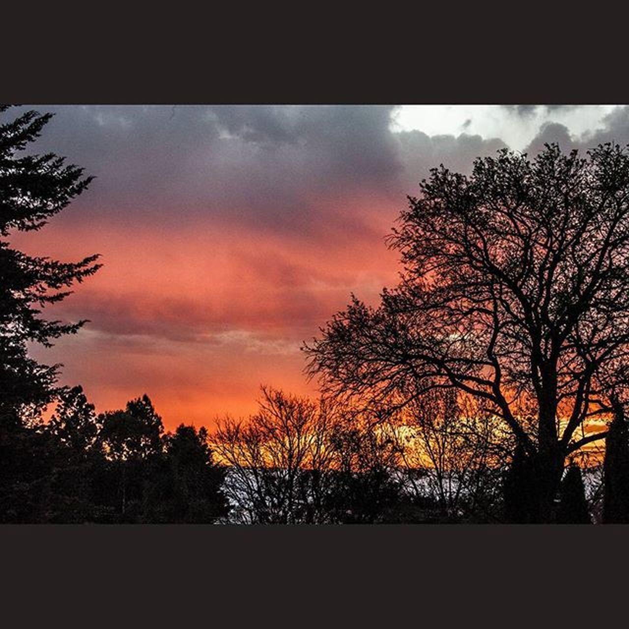 Canon Canon_official Canon_photos Canon5D Fotografo Foto Fotografia Rocafografia Tdt Mexicomagico Atardecer Sol Arte árbol